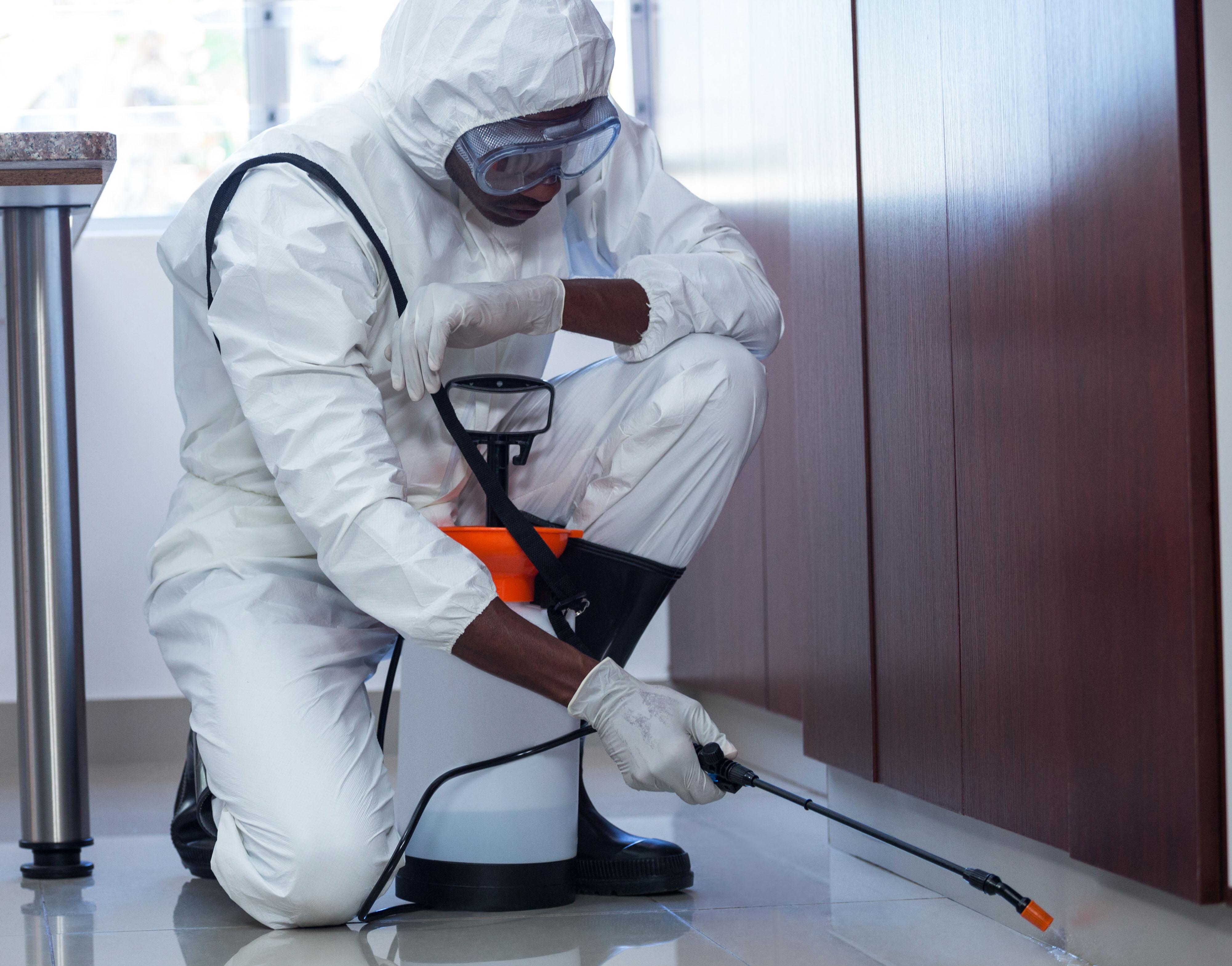 traitement punaises par insecticide